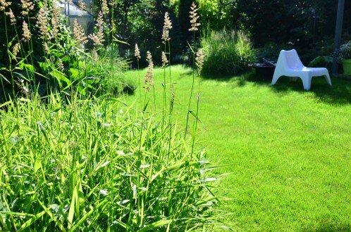 2011, nasadzenia w stylu naturalistycznym w ogrodzie